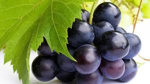 produzione uva Italia