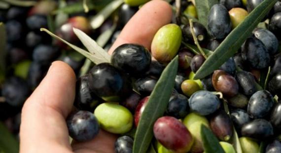 eccellenza olive
